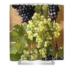 Grapes Shower Curtain by Edward Chalmers Leavitt