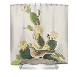 Grass Finch Or Bay Winged Bunting Shower Curtain by John James Audubon