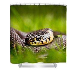 Grass Snake - Natrix Natrix Shower Curtain by Roeselien Raimond