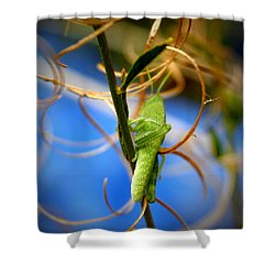 Grassy Hopper Shower Curtain by Chris Brannen