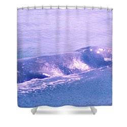 Gray Whale  Shower Curtain by Jeff Swan