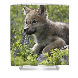 Gray Wolf Canis Lupus Pup Amid Lupine Shower Curtain by Tim Fitzharris
