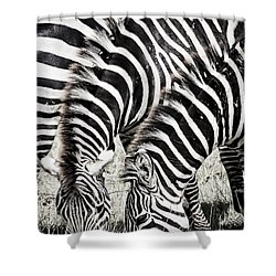 Grazing Zebras Close Up Shower Curtain by Darcy Michaelchuk