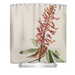 Great Carolina Wren Shower Curtain by John James Audubon