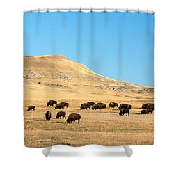 Great Plains Buffalo Shower Curtain by Todd Klassy