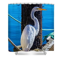 Great White Heron Shower Curtain by Garry Gay