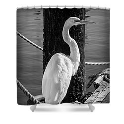 Great White Heron In Black And White Shower Curtain by Garry Gay