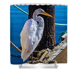 Great White Heron On Boat Dock Shower Curtain by Garry Gay