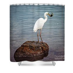 Great White Heron With Fish Shower Curtain by Elena Elisseeva