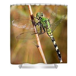 Green Dragonfly Closeup Shower Curtain by Carol Groenen