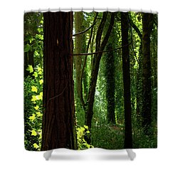 Green Forest Shower Curtain by Carlos Caetano