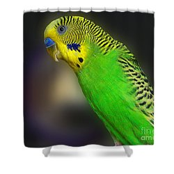 Green Parakeet Portrait Shower Curtain by Jai Johnson