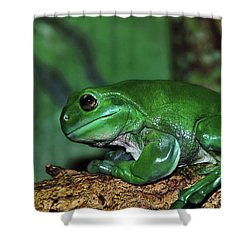 Green Tree Frog With A Smile Shower Curtain by Kaye Menner