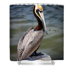 Grey Pelican Shower Curtain by Inge Johnsson