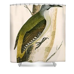 Grey Woodpecker Shower Curtain by English School