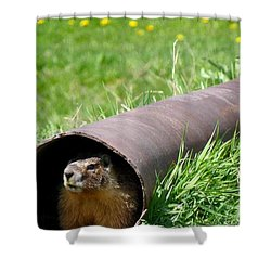 Groundhog In A Pipe Shower Curtain by Will Borden