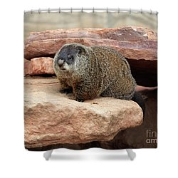 Groundhog Shower Curtain by Louise Heusinkveld