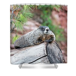 Groundhog On A Log Shower Curtain by Jess Kraft