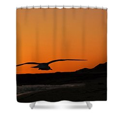 Gull At Sunset Shower Curtain by Dave Dilli