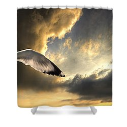 Gull With Approaching Storm Shower Curtain by Meirion Matthias
