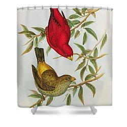 Haematospiza Sipahi Shower Curtain by John Gould