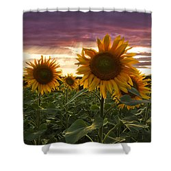 Happiness Is A Field Of Sunflowers Shower Curtain by Debra and Dave Vanderlaan