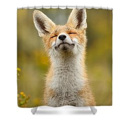 Happy Fox Shower Curtain by Roeselien Raimond