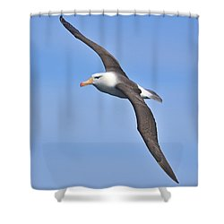 Hard Port Shower Curtain by Tony Beck