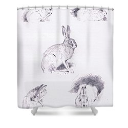 Hare Studies Shower Curtain by Archibald Thorburn