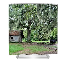 Havana Steers Shower Curtain by Jan Amiss Photography