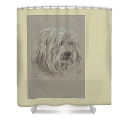 Havanese Shower Curtain by Barbara Keith
