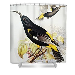 Hawaii Mamo Shower Curtain by Hawaiian Legacy Archive - Printscapes