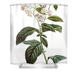 Heliotrope Shower Curtain by Granger