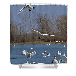 Here Come The Swans Shower Curtain by Bill Lindsay