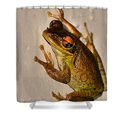 Heres Looking At You Shower Curtain by Kristin Elmquist