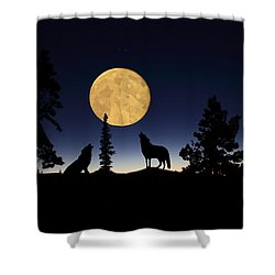 Hidden Wolves Shower Curtain by Shane Bechler