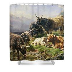 Highland Cattle Shower Curtain by William Watson