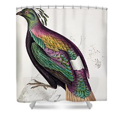 Himalayan Monal Pheasant Shower Curtain by John Gould