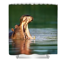 Hippopotamus Shower Curtain by Johan Swanepoel