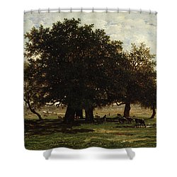 Holm Oaks Shower Curtain by Pierre Etienne Theodore Rousseau