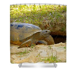 Home Sweet Burrow Shower Curtain by David Lee Thompson