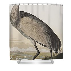 Hooping Crane Shower Curtain by John James Audubon