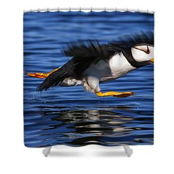 Horned Puffin  Fratercula Corniculata Shower Curtain by Marion Owen