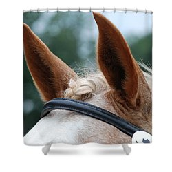 Horse At Attention Shower Curtain by Jennifer Ancker