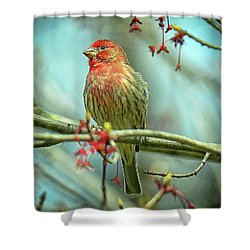 Shower Curtain featuring the photograph House Finch In Spring by Rodney Campbell