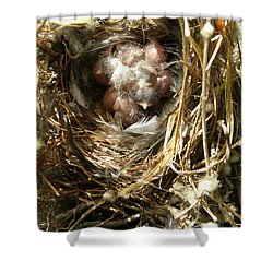 House Wren Family Shower Curtain by Angie Rea