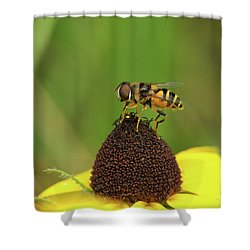 Hoverfly On Brown Eyed Susan Shower Curtain by Michael Peychich