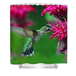 Shower Curtain featuring the photograph Hummingbird Gathering Nectar by Rodney Campbell