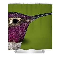 Hummingbird Head Shot With Raindrops Shower Curtain by William Lee