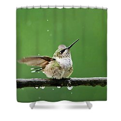 Hummingbird In The Rain Shower Curtain by Christina Rollo